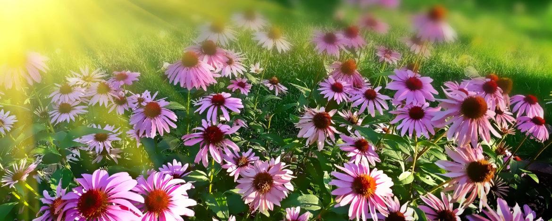 Heb jij een tuin op het zuiden? 4 tips!